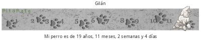 tickers perro PitaPata