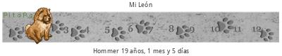 Cachorritos mezcla de chow de un mes y medio 4fEFp2
