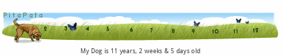 PitaPata Dog Symboler