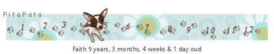 PitaPata Dog tickers